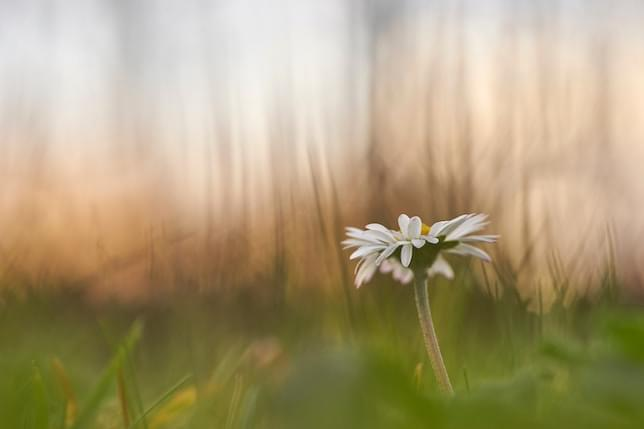 A flower with a beautifully blurred background